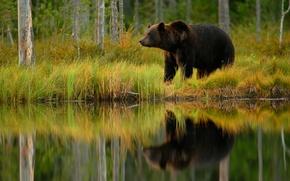 Картинка рыбка, медведь, обед