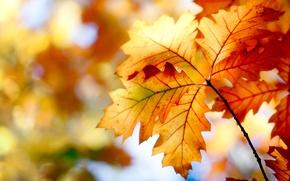 Картинка осень, листья, природа, краски, colors, nature, autumn, leaves, боке, bokeh, 2560x1600