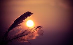 Обои sunset, перо, feathers, sun, рассвет, sky