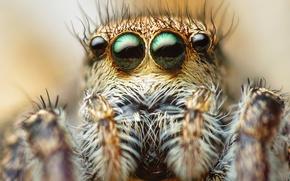 Картинка глаза, макро, паук, волоски