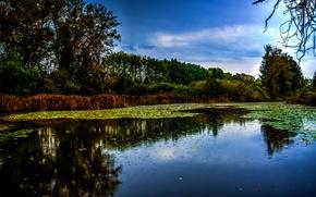 Обои Деревья, Река, фото, Германия, München, Природа, Isar