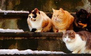 Обои кошки, коты, ступеньки, квартет