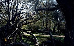 Картинка деревья, паутина, паук, тёмные