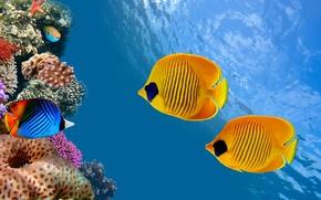 Картинка sea, ocean, nature, water, animal, fish, starfish, reef, America, sugoi, subarashii, coral, tourism, Costa Rica, …