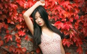 Обои девушка, фон, листья