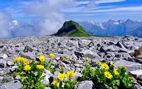 Картинка цветы, горы, камни, Франция, Альпы, Верхняя Савойя