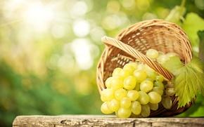 Обои боке, лист, стол, корзина, виноград, гроздь