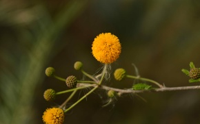 Картинка Flower, Yellow, Small