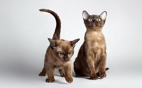 Картинка свет, кошки, фон