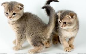 Картинка пара, котята, малыши
