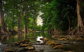 Картинка лес, лето, природа, река