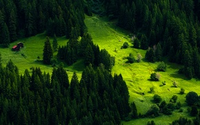 Картинка зелень, трава, деревья, гора, Швейцария, склон, луг, домики