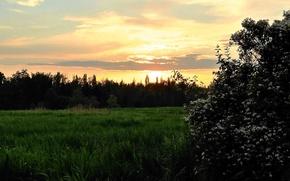 Картинка вечер, барбарис, облака цветущий куст, Заря