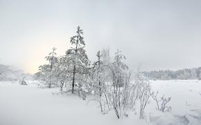 Обои ёлка, снег, пейзаж, зима