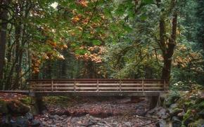 Картинка осень, лес, листва, forest, мостик, bridge, Autumn, leaves, fall