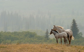 Картинка пейзаж, природа, кони