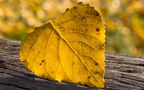 Картинка макро, природа, лист