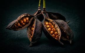 Картинка макро, семена, плоды