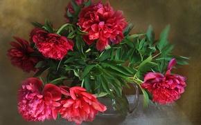 Картинка цветы, ваза, пионы