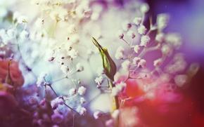 Картинка цвет, розы, бутоны, белые цветы