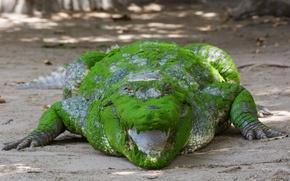 Обои цвет, Африканский крокодил, пасть, взгляд