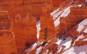 Картинка снег, горы, дерево, скалы, Юта, США, Bryce Canyon National Park