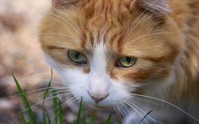 Картинка кошка, усы, мордочка