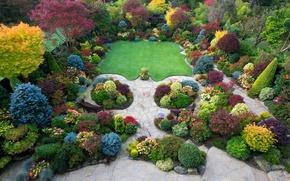 Картинка газон, осень, лавочки, Walsall Garden, Великобритания, кусты, деревья, красочно, вид сверху, парк, дизайн, цветы