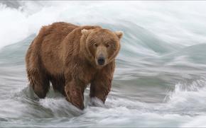 Картинка животные, природа, медведи, охота