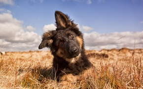 Картинка лето, взгляд, природа, друг, собака