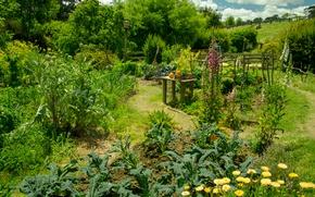 Картинка Зелень, Природа, Лето, Растения, Nature, Summer, Огород