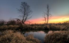 Картинка деревья, озеро, рассвет, утро, камыш
