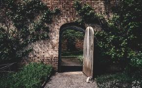 Обои стены, двери, солнечный, вьющееся растение