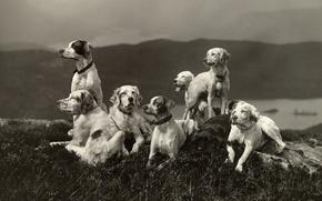 Картинка собаки, пейзаж, отдых