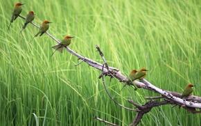 Обои лето, Птицы, природа