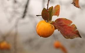 Обои осень, яблоко, ветка