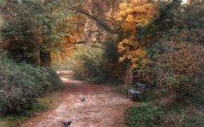 Обои парк, осень, природа
