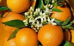 Картинка цветы, апельсин, фрукт