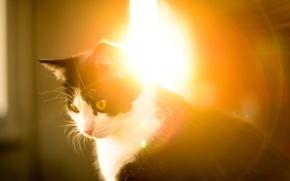 Картинка кошка, свет, животное, утро, сидит