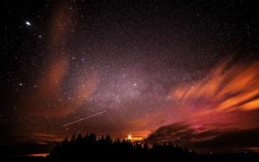 Картинка космос, звезды, деревья, ночь, пространство, силуэт