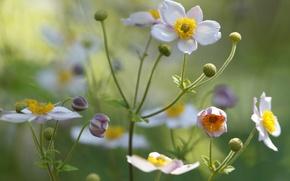 Картинка цветок, лепестки, поле, луг, растение