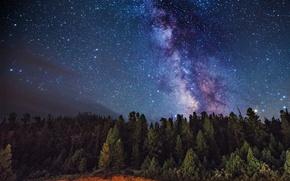 Картинка космос, звезды, деревья, Млечный Путь, тайны