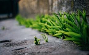Картинка трава, асфальт, весна, боке