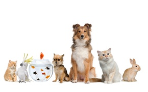 Картинка кот, рыбки, собака, кролик, попугай, parrot, rabbit, cat, dog, fish
