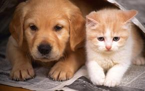 Обои собака, кошка, котенок, дружба, щенок