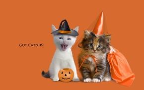 Обои животные, котенок, котята, оранжевый фон