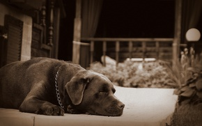 Картинка сон, собака, Питер, пес