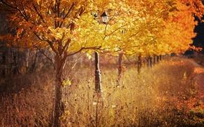 Картинка осень, деревья, природа, парк