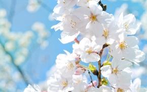Картинка солнце, макро, цветы, тепло, весна, лепестки, яблоня, весенние картинки