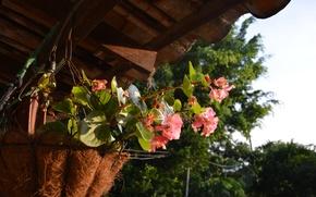 Картинка nature, flowers, plants